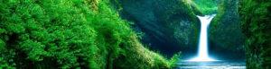 Eco Friendly, Biodegradable Paint